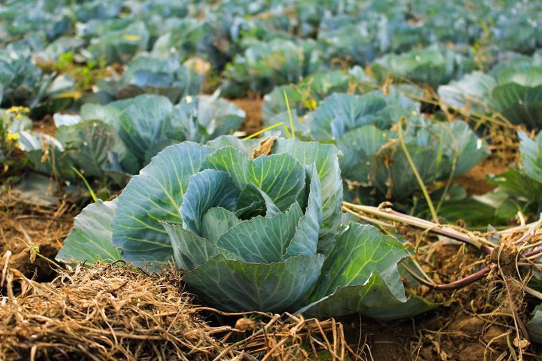 Nowy brytyjski raport – ile żywności marnują rolnicy?
